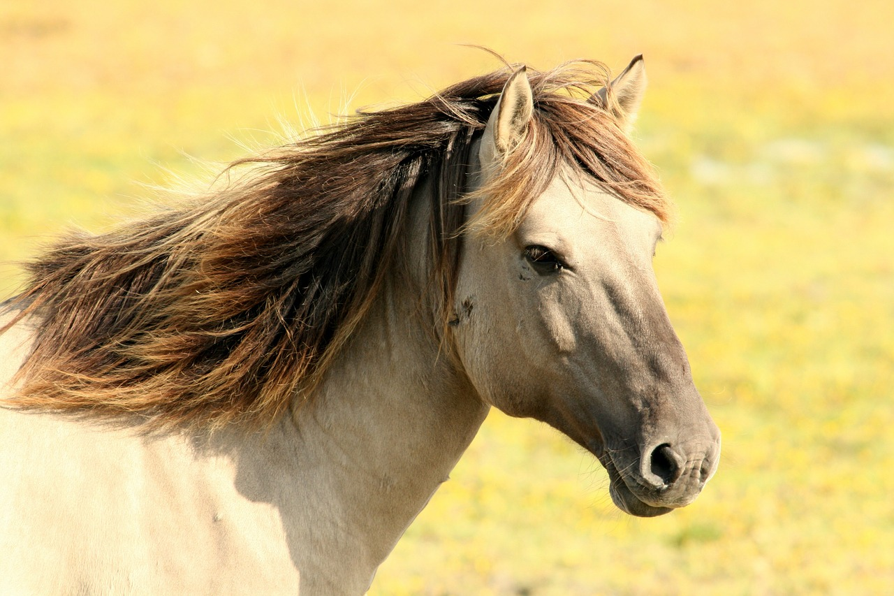 Rutas a caballo en Madrid