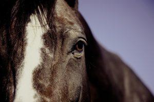 paseos caballo madrid