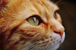 Imagen de un gato en primer plano