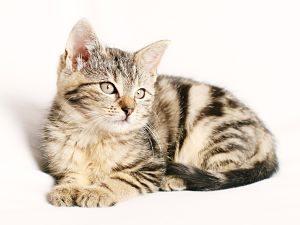 Foto de un gato joven