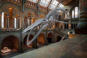 Imagen de un museo con un esqueleto de dinosaurio