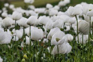 Flores blancas del paraje